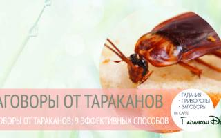 Молитва для избавления от тараканов